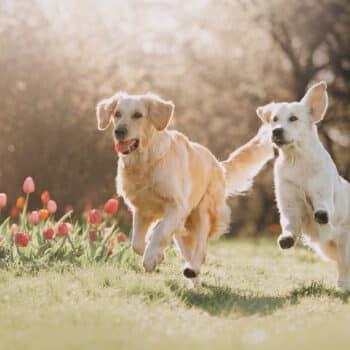 Em Pet park, cães socializam e convivem em ritmo de brincadeira