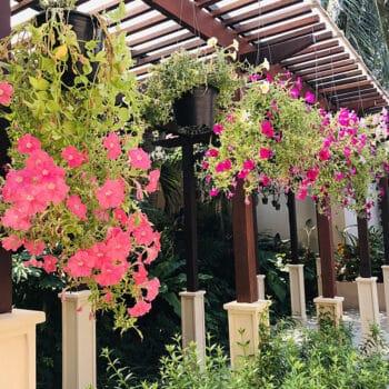 Jardins suspensos, a nova tendência sustentável